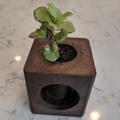 Modelos 3D para imprimir gratis Planta de Aire Suculenta Jarrón Remix, ianmclein