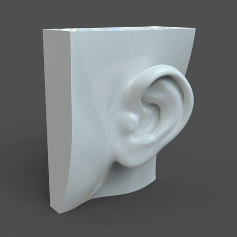 3D print model Realistic lifesize female ear, solidhumans