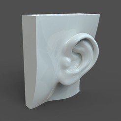 Free Realistic lifesize female ear STL file, solidhumans