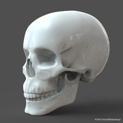 3D print model Human Skull model M3P1D1V1Skull, solidhumans