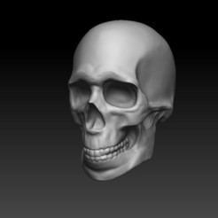 Download free STL file Skull speed sculpt • 3D printable model, Nikano_Studio
