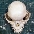 pug-skull-03.jpg Download free STL file Pug skull • 3D printing design, voxinaudita