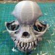 pug-skull-05.jpg Download free STL file Pug skull • 3D printing design, voxinaudita