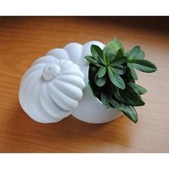 Imprimir en 3D Shell Planter, iagoroddop