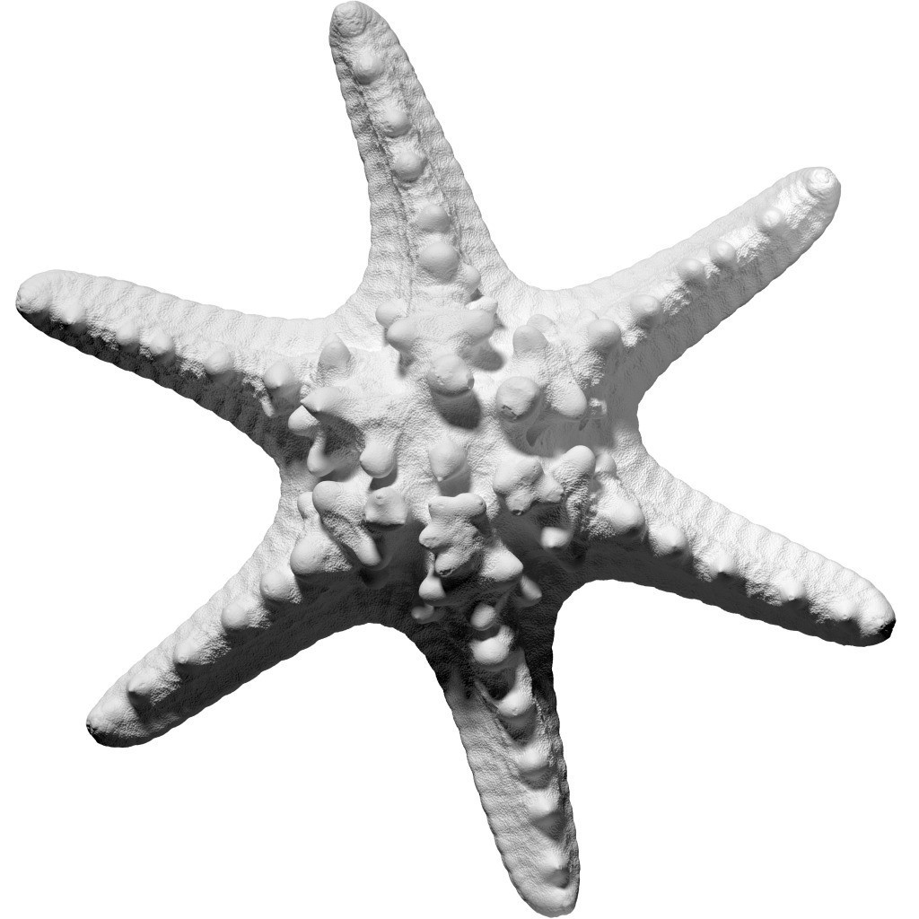 Horned_Sea_Star-1-1024x1024.jpg Download free STL file Horned Sea Star • 3D printable model, ThreeDScans