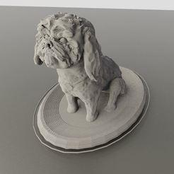 Bobby Shihtzu render 1.JPG Download 3MF file Bobby Shih Tzu dog • 3D printable model, alejandromorataya