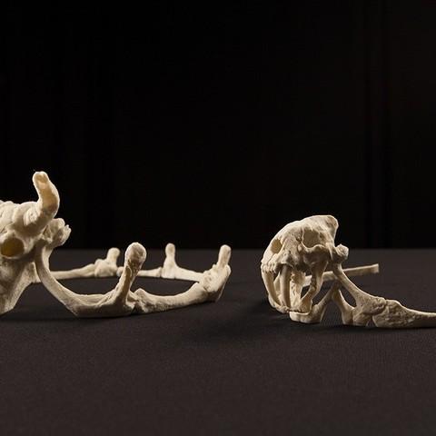 skulls_1_display_large.jpg Download free STL file Storied Skulls Crown and Tiara • 3D printer model, alterboy987