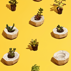 Free 3d printer model Cactus Pots project by Mayku, Mayku
