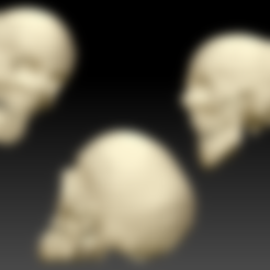 Download free STL file Human Skull and Mandible , Programmed