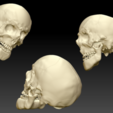 Human Skull with Mandible- display pic.png Download 3DS file Human Skull and Mandible  • Object to 3D print, Programmed