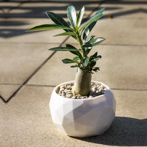 3D print files Low Poly Succulent/Bonsai Pot (2 versions), simonprints