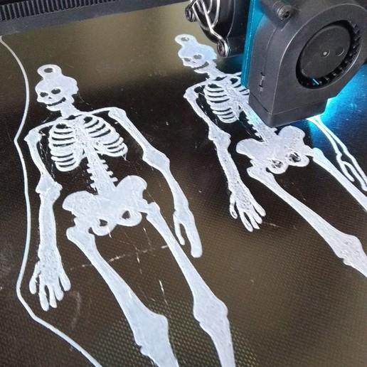 IMG_20191008_144545.jpg Download free STL file Skeleton Buntings • 3D printer template, 3DME