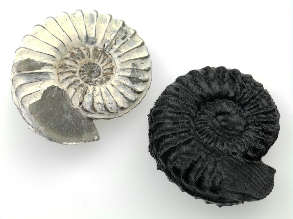 ammonite_and_print_display_large.jpg Download free STL file Ammonite • 3D printer design, MuseumVictoria