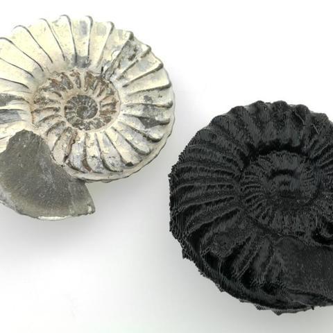 Télécharger fichier 3D gratuit Ammonite, MuseumVictoria