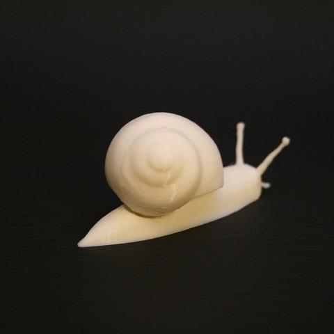 Free 3D model Realistic garden snail, crashdebug