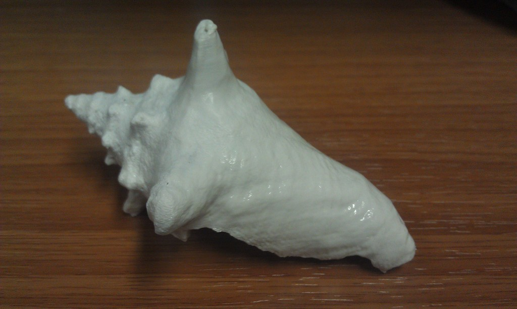2013-03-11_20.40.53_display_large.jpg Download free STL file 3D Scan of a Shell • 3D print template, PrintedSolid