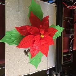 stl file Christmas Eve Flower, EngaolI