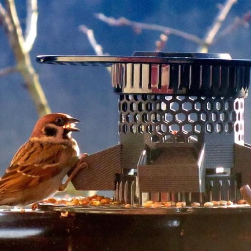 pic0.jpg Download free STL file Bird Feeder [prusament spool] • 3D print model, 3d-dragar
