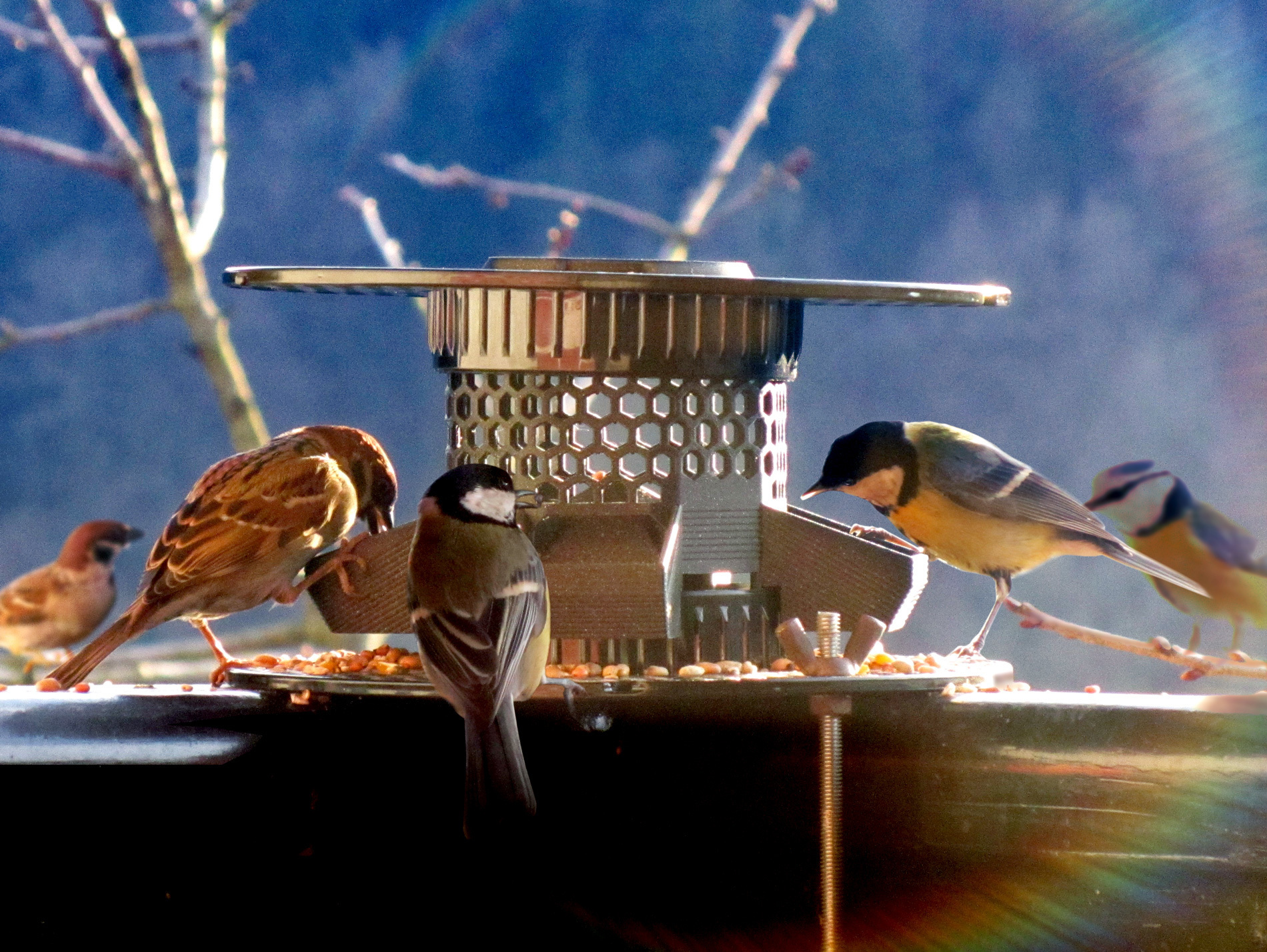 COVER.jpg Download free STL file Bird Feeder [prusament spool] • 3D print model, 3d-dragar