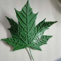 Download free 3D printer designs Maple Leaf, arifsethi