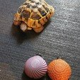 Download free STL file Squishy Turtle • 3D print template, h_bounty