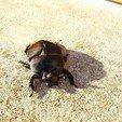 3D printer files lucky scarab, veroniqueduval9118