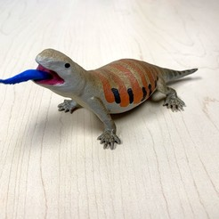 Download free 3D model Blue Tongued Skink, auralgasm