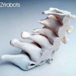 Download free 3D printer templates 3D printed Cervical Spine, daGHIZmo