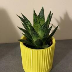 IMG_1641.JPG Télécharger fichier STL gratuit Flower Pot - Plant Pot • Modèle pour imprimante 3D, MickaJZI
