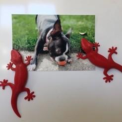Télécharger fichier STL gratuit Aimant pour réfrigérateur Gecko • Objet imprimable en 3D, cult3dp