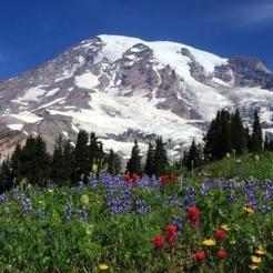 Download free STL files Mount Rainier, Pudedrik