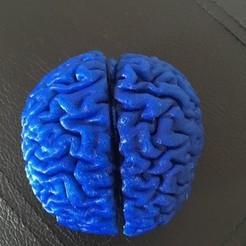 Modelos 3D Modelo cerebral, Kris_Ship