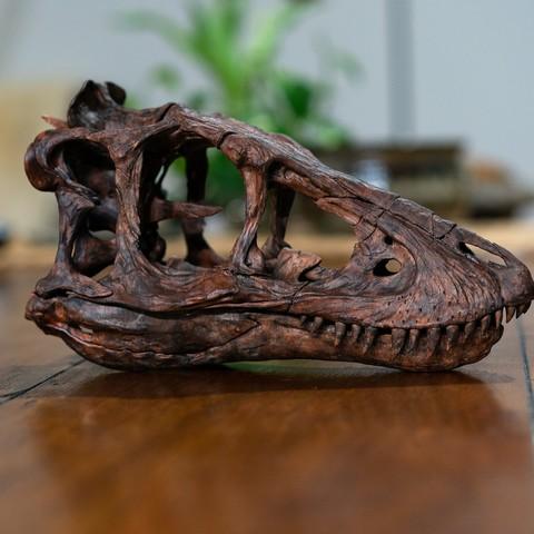 Descargar diseños 3D Esqueleto T-rex de bebé de tamaño natural - Parte 01/10, Printer414