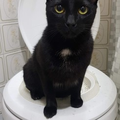 20190527_222257.jpg Download STL file CAT TOILET TRAINING KIT v2.2 - CAT TRAINER SEAT v2.2 • 3D printable design, Matt3D
