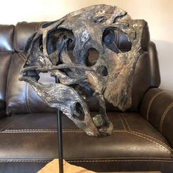 Download 3D printing files Life size Citipati (Oviraptor) skull and cervical vertebrae, tonygagler