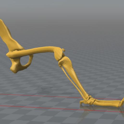 pata trasera.PNG Télécharger fichier STL gratuit Squelette de chien - (Squelette de chien) • Design imprimable en 3D, hiddenart8
