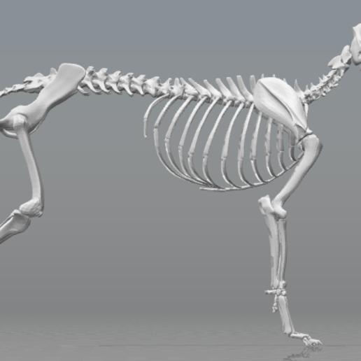 perro.PNG Télécharger fichier STL gratuit Squelette de chien - (Squelette de chien) • Design imprimable en 3D, hiddenart8