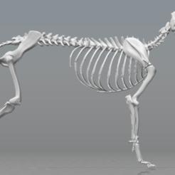 Télécharger STL gratuit Squelette de chien - (Squelette de chien), hiddenart8