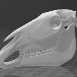cráneo.JPG Download free STL file horse skull - part 1 • 3D printer model, hiddenart8