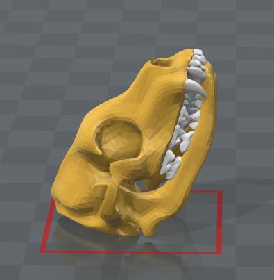 craneo.PNG Télécharger fichier STL gratuit Squelette de chien - (Squelette de chien) • Design imprimable en 3D, hiddenart8