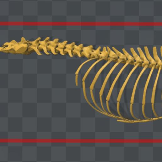 espina dorsal.PNG Télécharger fichier STL gratuit Squelette de chien - (Squelette de chien) • Design imprimable en 3D, hiddenart8