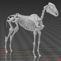 Captura.JPG Download STL file Horse skeleton - part 2 • Model to 3D print, hiddenart8