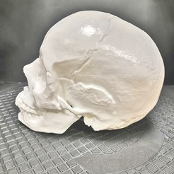 Free 3D printer files Human skull, DiginCreate