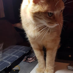 Download 3D printing files Cat photo, KalamityKontact