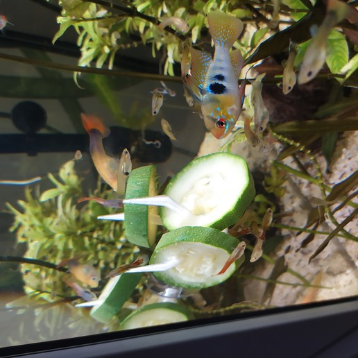 Download free STL file Aquarium vegetable holder • 3D printing model, Aliasze13