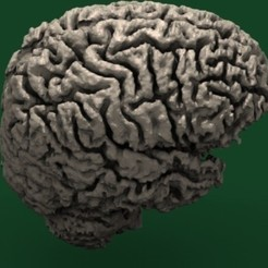 slicer3D_human_brain_display_large_display_large.jpg Download free STL file Human Brain • Design to 3D print, Bolog3D