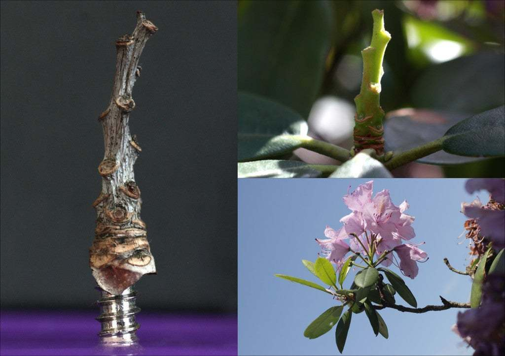 """kombi.jpg Download free STL file Tabletop plant: """"Rhododendron Nostril"""" (Alien Vegetation 26) • Design to 3D print, GrimGreeble"""