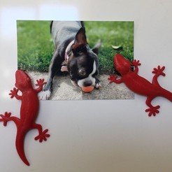 Download free 3D model Gecko Fridge Magnet, zapta