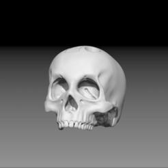 Descargar archivo 3D Cráneo, freeclimbingbo