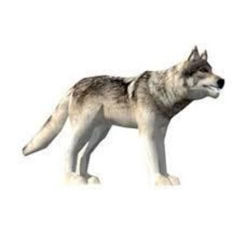 Descargar archivo 3D gratis Wolf 3D, medyator